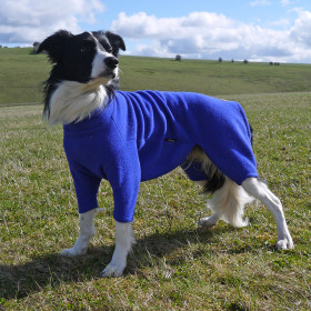 Cobalt Blue Dog Suit