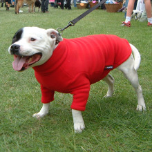 Bullie Sweater in Red