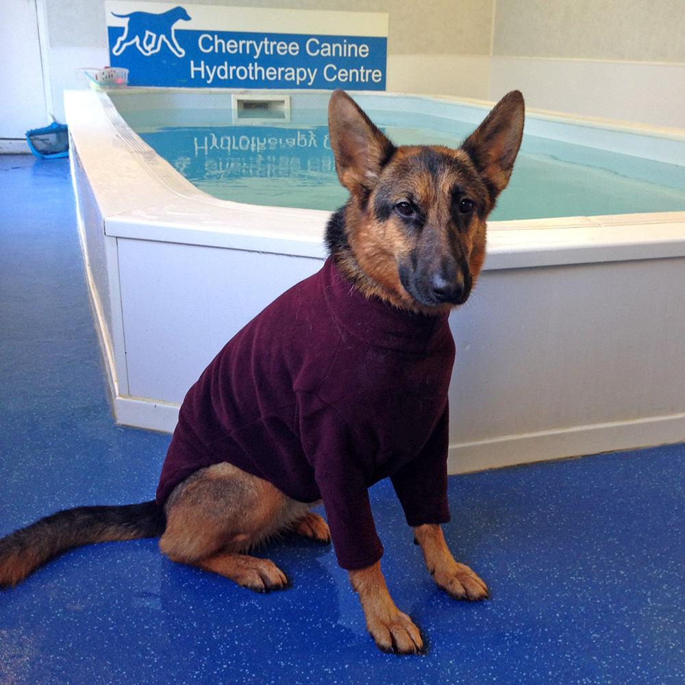 Best Dog Coats For Yorkies